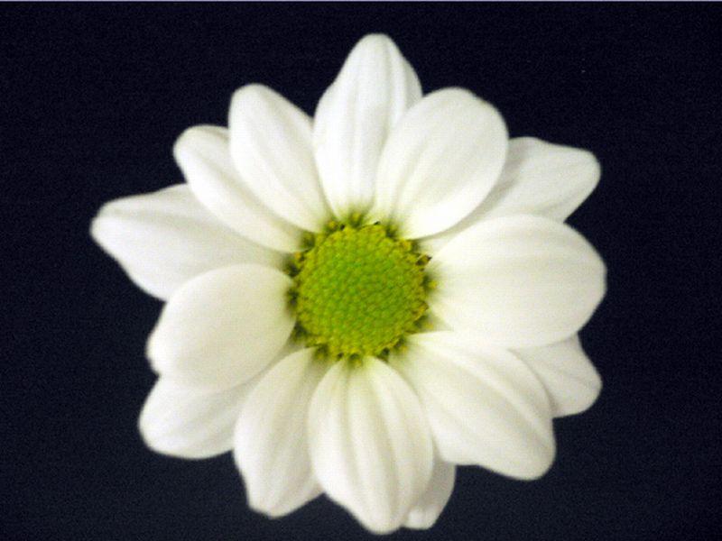 農研機構など、「花の画像」が心身のストレス緩和