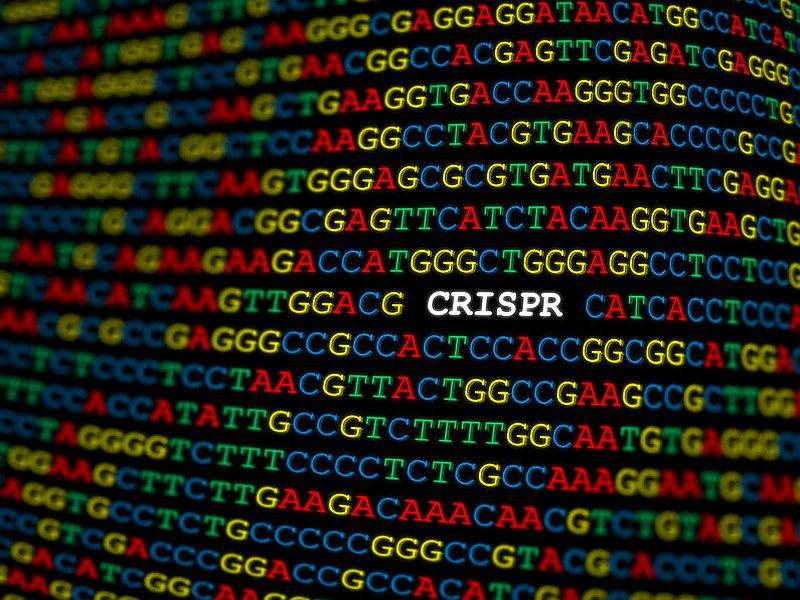 米研究者、CRISPRによる免疫抑制で抗AAV抗体の産生を抑制