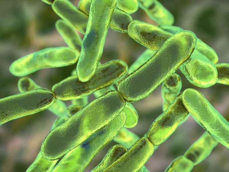 AuB、ソルビトールから短鎖脂肪酸を産生する新しいビフィズス菌を発見