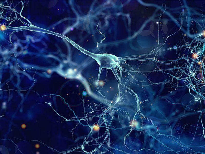 米研究者、栄養不足の膵がんに栄養供給していたのは神経軸索