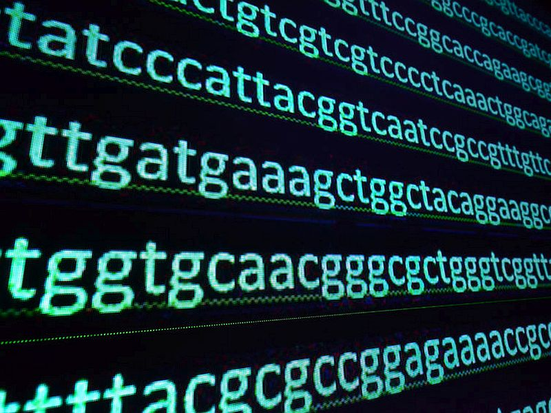 ゲノムデータ検索システムCANNDs、4月からテスト稼働開始