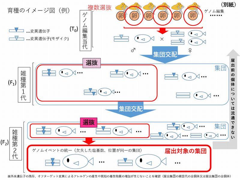 """厚労省の調査会、ゲノム編集""""魚類""""取り扱い留意事項取りまとめ"""